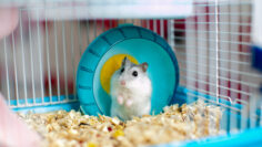 """""""This hamster has amazing abilities"""""""